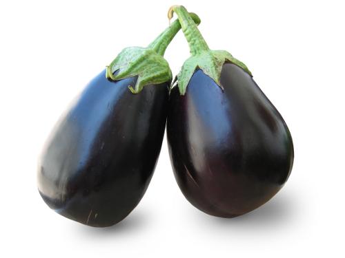 aubergine en septembre