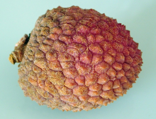 fruit litchi